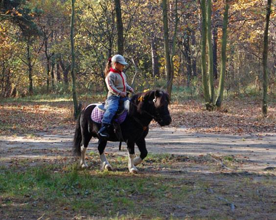 Урок езды на пони