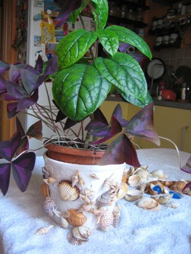 Украшаем ракушками цветочный горшок