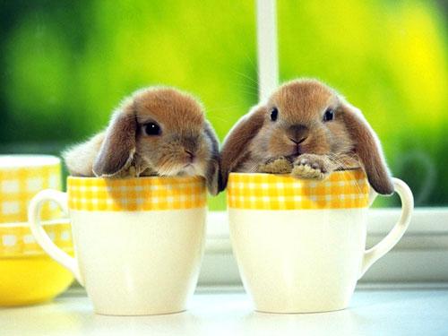 Кролики в подарок