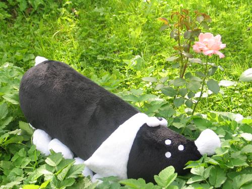 Такса в саду
