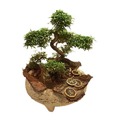Деревце в горшочке