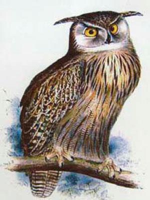 Холст с изображением совы
