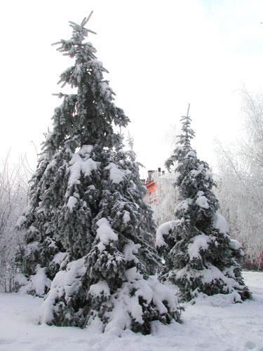 Теория новогодних подарков