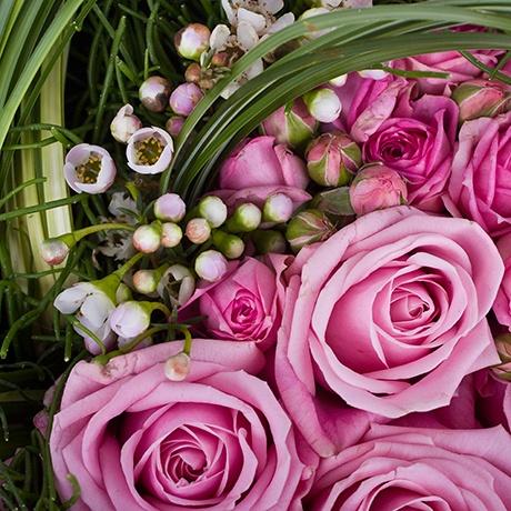Розы и ваксфлауэр