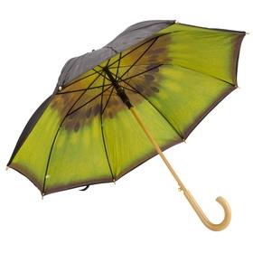 зонт киви