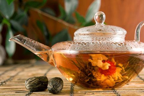Распускающийся чайный цветок