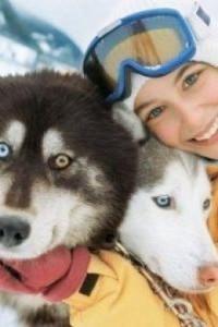 Управление собачьей упряжкой