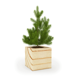 fitocube_spruce2-500x500